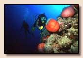 Mer Rouge - Sinai